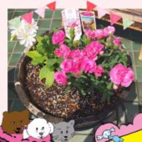 キレイなお花が仲間入りしました(*^_^*)
